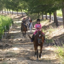 Horse riding in the winery Sicily